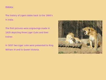 Liger Power Point - Information Facts Pictures History