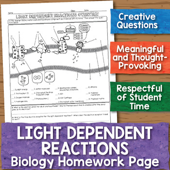Light Dependent Reactions Biology Homework Worksheet