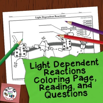 Photosynthesis activity light dependent reactions coloring page ccuart Gallery
