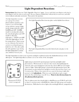 Photosynthesis Activity: Light Dependent Reactions Coloring Page