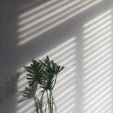 Light and Shadows - Lesson 2 | Sun Shadows
