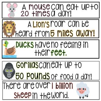 Lightbox SHELF Slides - 40 Animal Fun Facts!