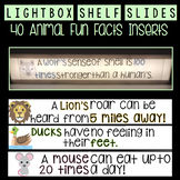 Lightbox SHELF Slides - 40 Animal Fun Facts!