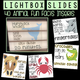 Lightbox Slides - 40 Animal Fun Facts!