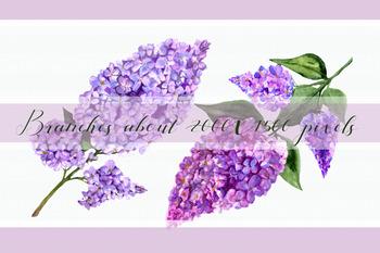 Lilac Watercolor Clip Art Set + Wreath, Border and Flower Arrangement
