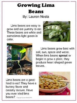 Lima Bean Close Read