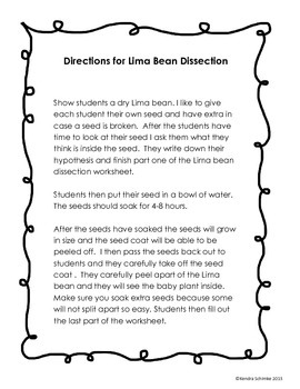 seed dissection worksheet kindergarten seed best free printable worksheets. Black Bedroom Furniture Sets. Home Design Ideas