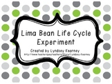 Lima Bean Life Cycle