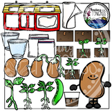 Lima Bean Plant Life Cycle Clipart