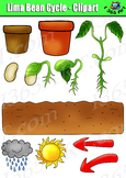 Lima Bean Plant Life Cycle Clipart Set - Color & Black/White