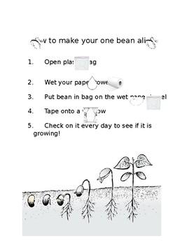 Lima bean in a bag