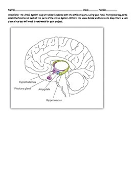 Limbic System Diagram