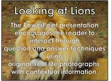 AFRICAN ANIMALS: Lions - PowerPoint presentation