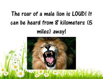 Lion Facts FREEBIE