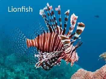 Lion Fish - Power Point invasive species facts information history pictures