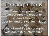 Lions - Interactive PowerPoint presentation