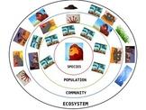 Lion King Ecosystem Paper Plate Model