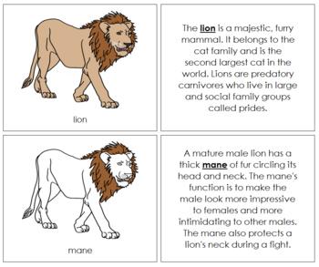 Lion Nomenclature Book