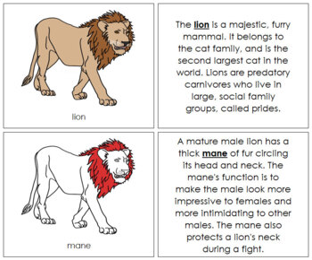 Lion Nomenclature Book (Red)