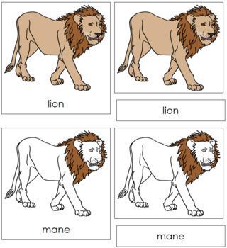 Lion Nomenclature Cards