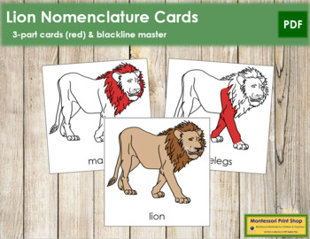 Lion Nomenclature Cards (Red)