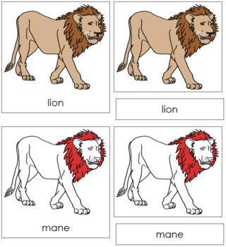 Lion Nomenclature Cards (Red)