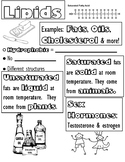 Macromolecules - Lipid Doodle Notes