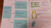 Lipid Molecules