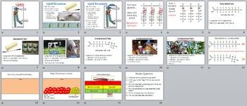 Lipid PowerPoint (+ free internet worksheet)