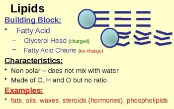 Lipid & Protein Notes