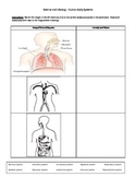 Elementary Science Literacy Worksheet - Human Body Systems