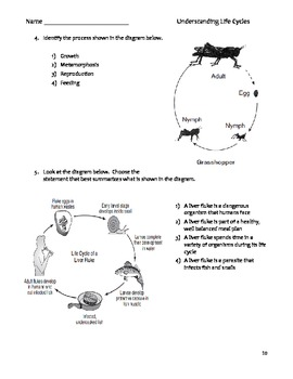 Elementary Science Literacy and Science Packet - Life Cycles & Metamorphosis