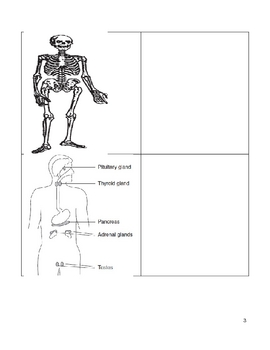 Middle School Literacy and Science Vocabulary Packet -  Human Body