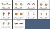 Literacy/Vocabulary/Autism/Montessori Nomenclature Cards: Marine Animals