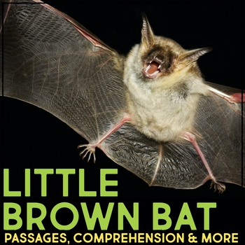 Little Brown Bat Informational Article, Comprehension & Vocabulary Activities