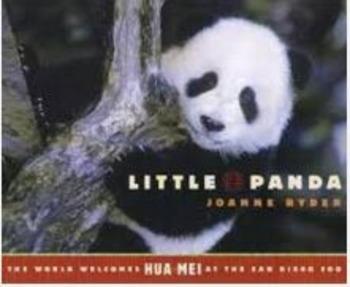 Little Panda Vocabulary Assessment