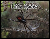 Little Spider (an emergent reader) Photo Book