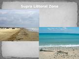 Littoral Zones Powerpoint (Marine Ecology)