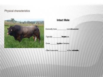 Livestock Breeds & Sex Terminology