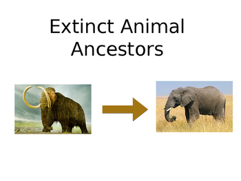 Living Ancestors of Extinct Animals