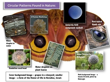 Circular Patterns in Nature PowerPoint & Activity Guide