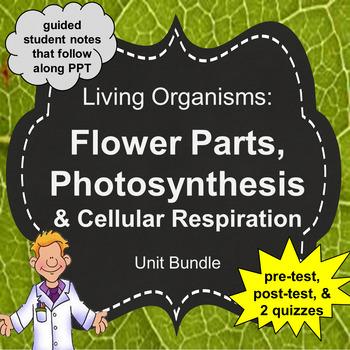 Living Organisms Unit: Flower Parts, Photosynthesis, Respiration Unit