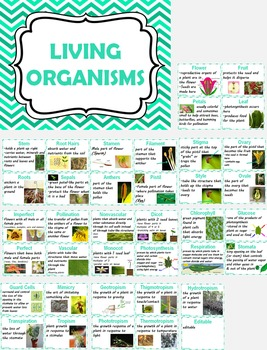 Living Organisms Word Wall Science Vocabulary