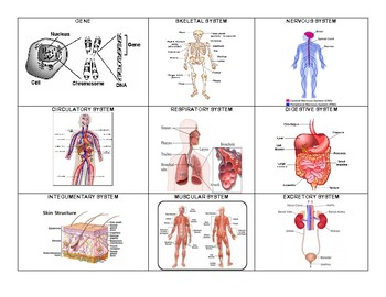 Living Systems Vocabulary Words with Diagrams