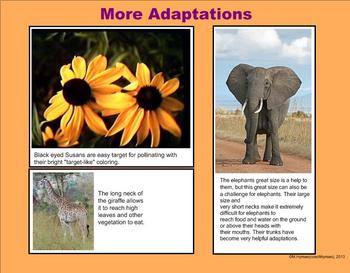 Living Things, Competition, and Survivial- A Third Grade PowerPoint Introduction