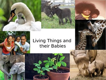 Living Things and Their Babies
