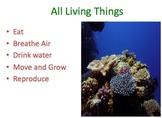 Living V. NonLiving Things