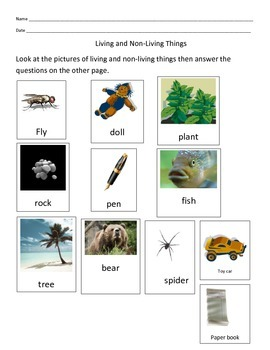 Living and Non-Living Things Picture Sort Out