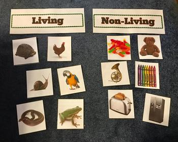 Living And Non Living Things 245101 on Kindergarten Curriculum