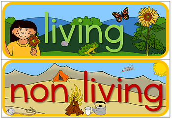 Living and Non Living word wall